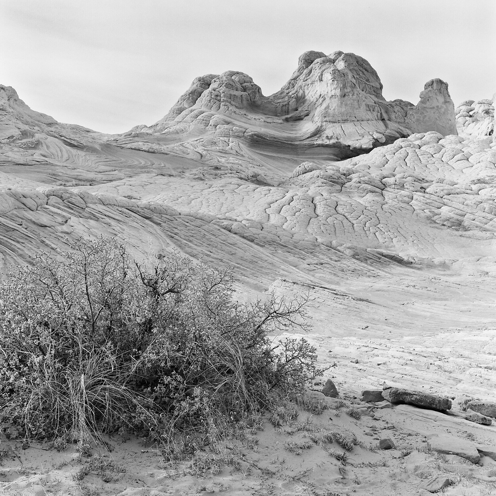 Vermillion Cliffs National Monument, Arizona © 2016.  Image: Rolleiflex 2.8 F + Zeiss Planar 1:2.8/80mm.
