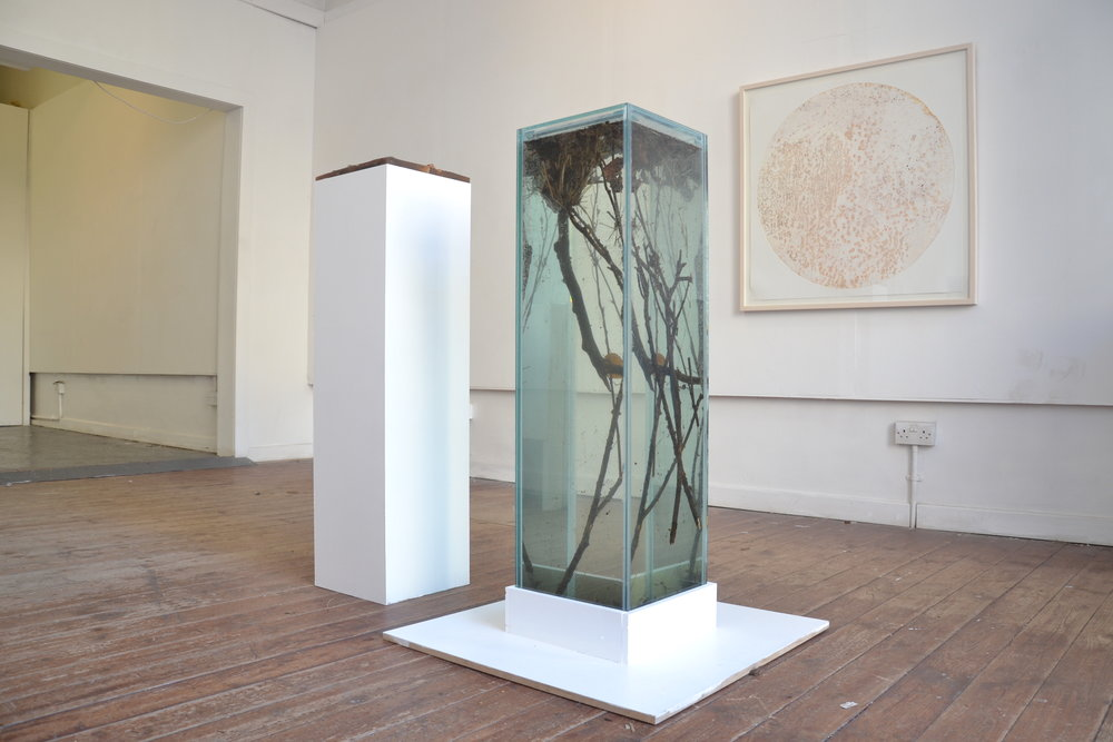 RK, Installation View, New Glasgow Society, 'Topophilia', Glass Tank, Etching Print, Resin Cast, Sizes Variable, 2017.JPG