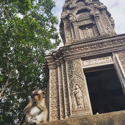 Praying Monkey Cambodia.jpg