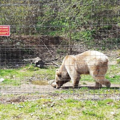 Libearty bear sanctuary.jpg