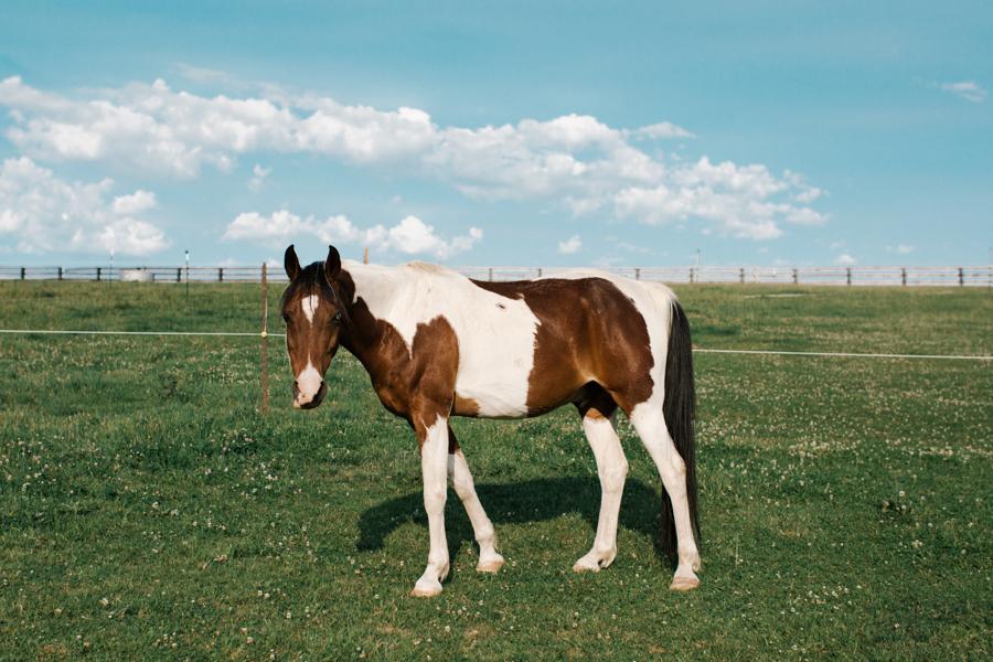 Cedar Ridge Ranch-20.jpg