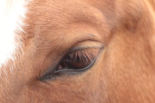 joe eye.jpg