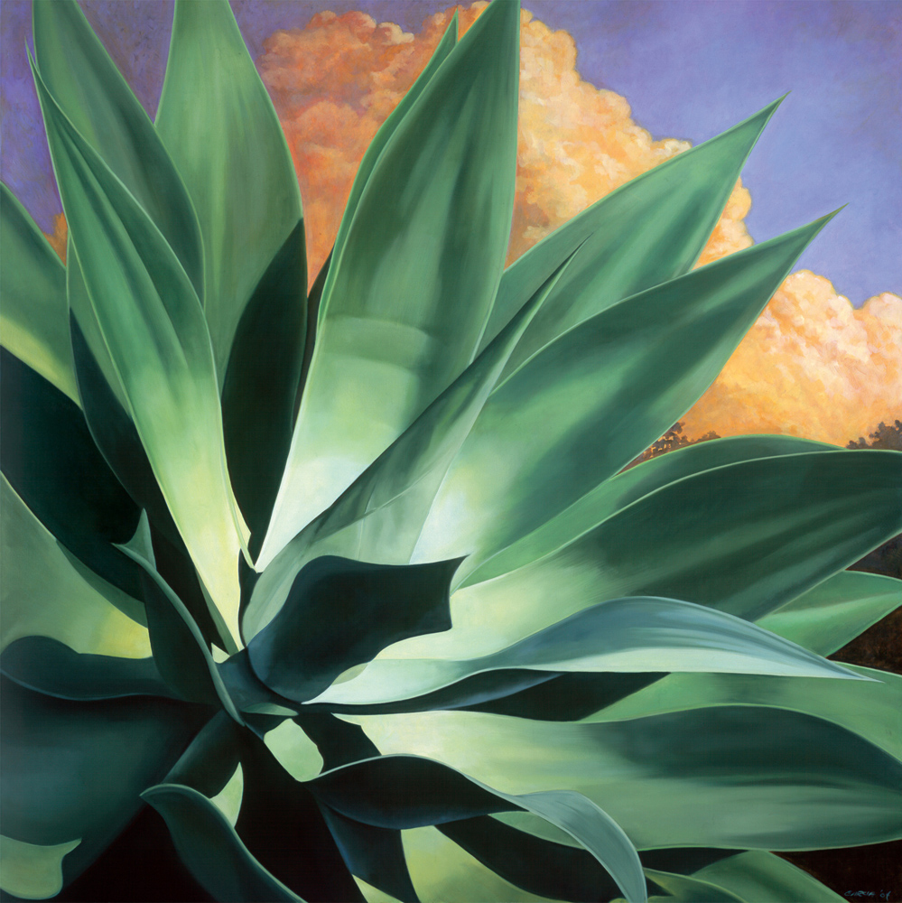 Agave Dreamscape #1, 36x36, oil on canvas, sold.