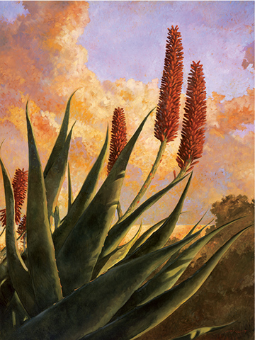 Aloe Glow, 36x24, oil on canvas, sold.