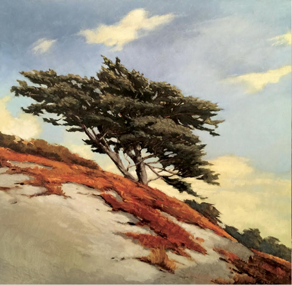 Monterey Cypress, 12 x 12, oil on board.  SOLD