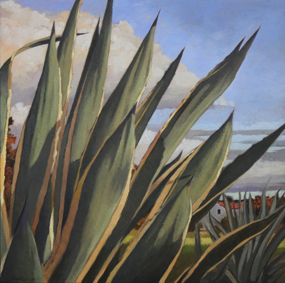 Mission Agaves, 12x12, oil on board. available at  Waterhouse Gallery