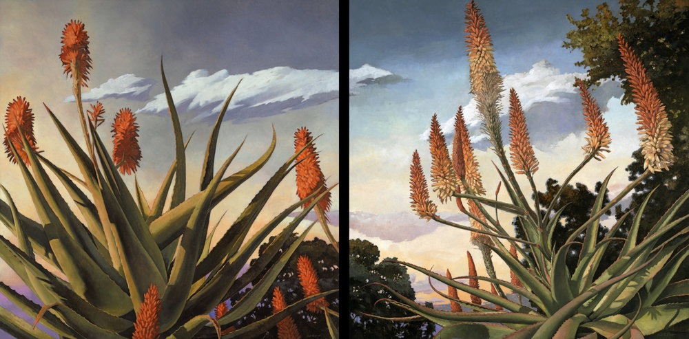 Aloe Speciosa and Aloe Tusker Dyptic (comission) 36x72, at artist studio