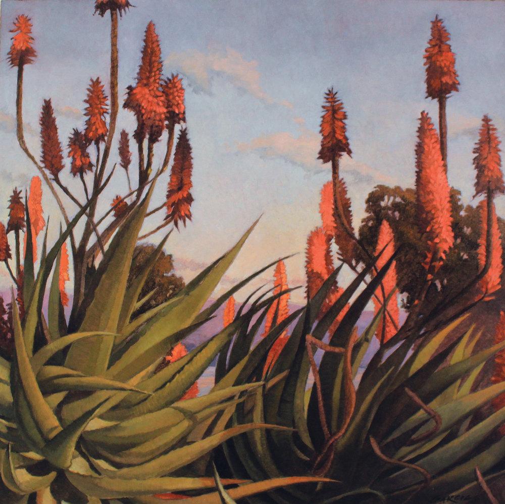 Aloe Dreamscape, 16x16, oil on board. available at Carpinteria Arts Center