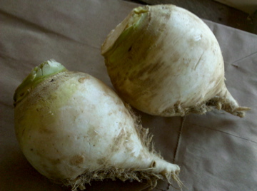 Gilfeather Turnip