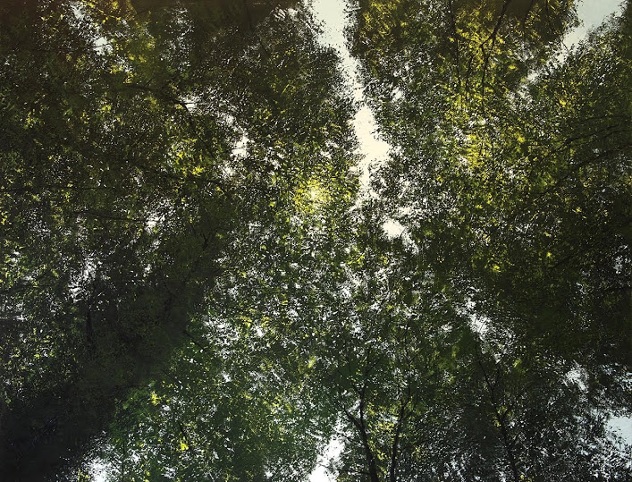 "Benoît Trimborn, ""Le soleil et la foret"", oil on canvas, 59"" x 74"""