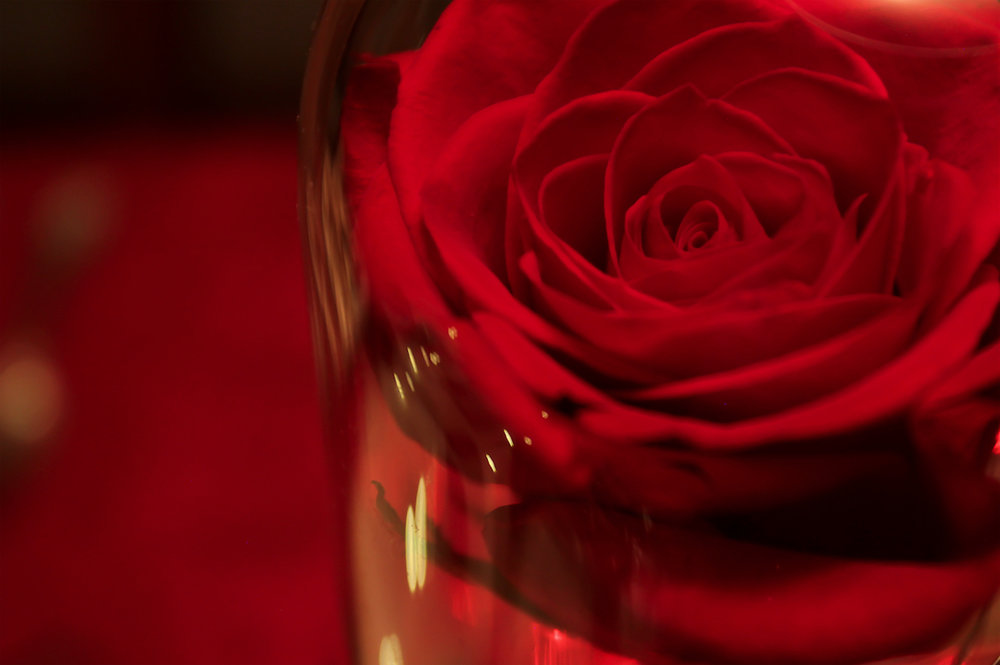 DesignOrganizeParty_ Beauty and the Beast_Dinner_Party_Enchanted Rose Close Up1.jpg