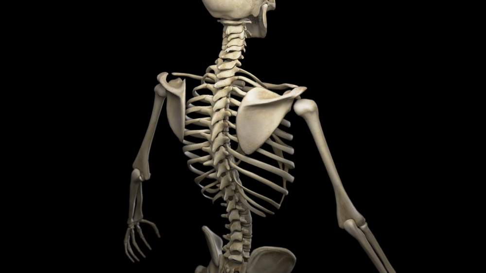 Image-Of-Human-Skeleton-Simply-Simple-Photo-Gallery-Website-With-Image-Of-Human-Skeleton.png