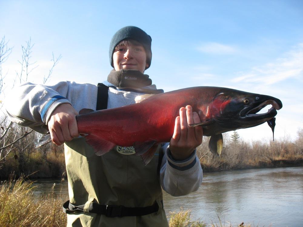 Fall salmon 1.jpg