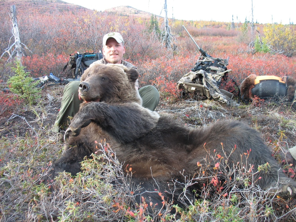 alaska guided bear hunts