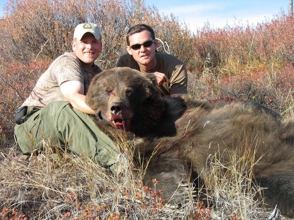 Alaska Grizzly bear.jpg