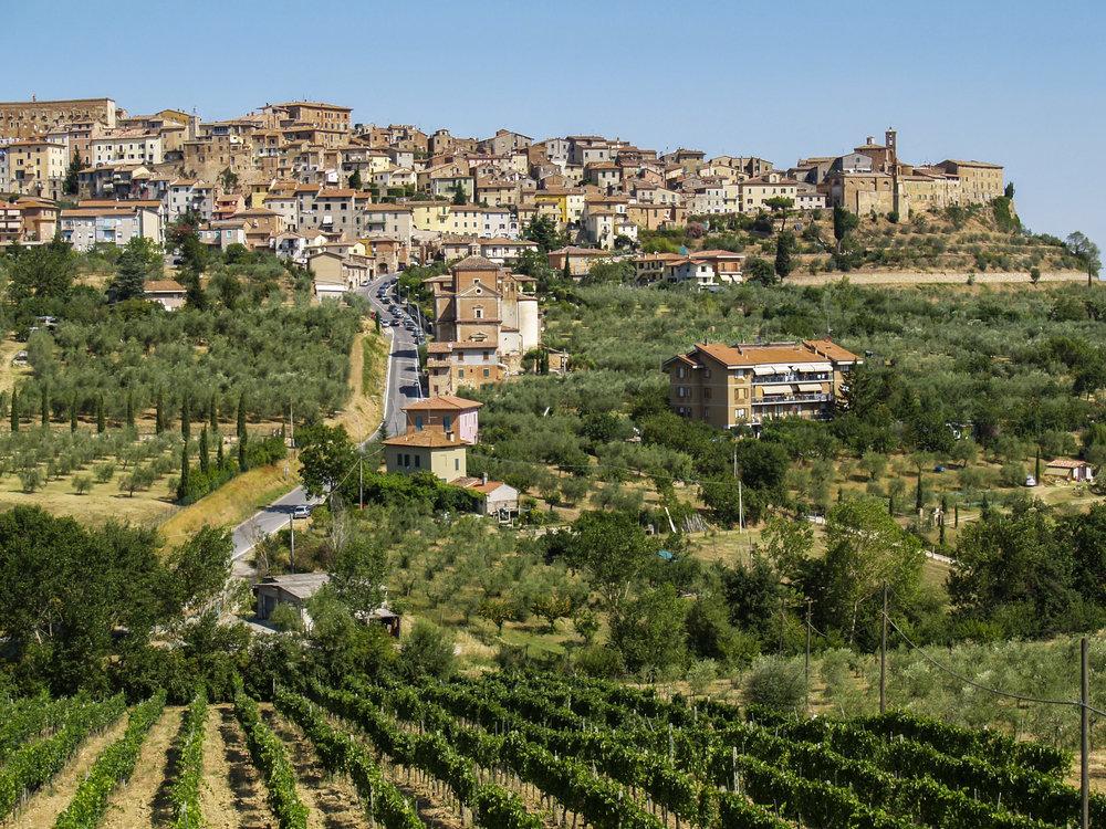 Italy Tuscany Chianciano Terme Agritourismo Vineyard - P1018240 Lg RGB.jpg