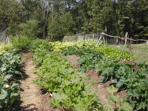 back farm 3