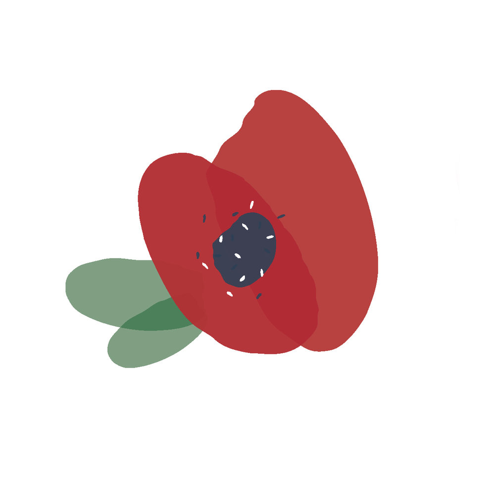 Bespoke poppy illustrations