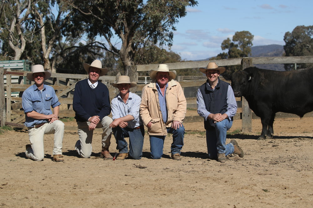Left to right: Jack White, Paul Dooley, Harry White, Dick Croake, Andy Carter pictured with Lot 5 by Te Mania Emperor.