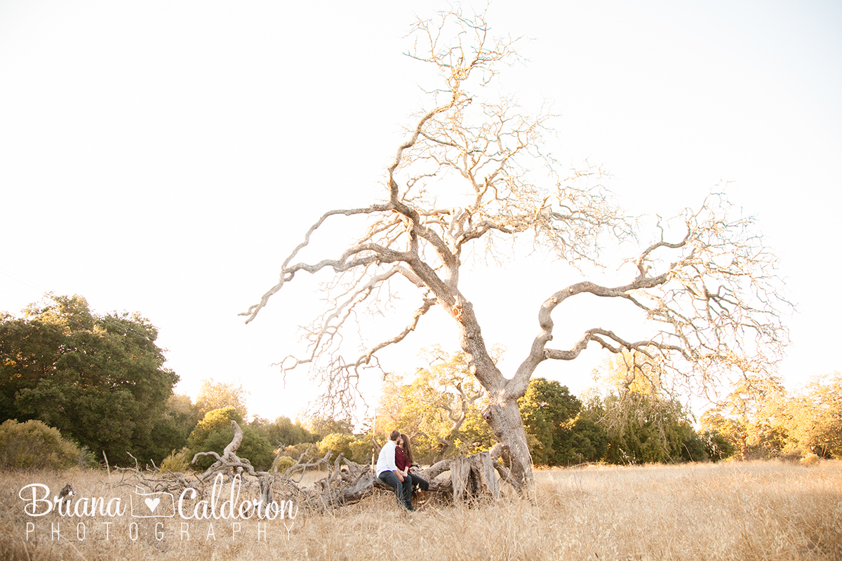 Rancho San Antonio engagement photo shoot in Cupertino, CA.  Photos by Briana Calderon Photography based in the San Francisco Bay Area.