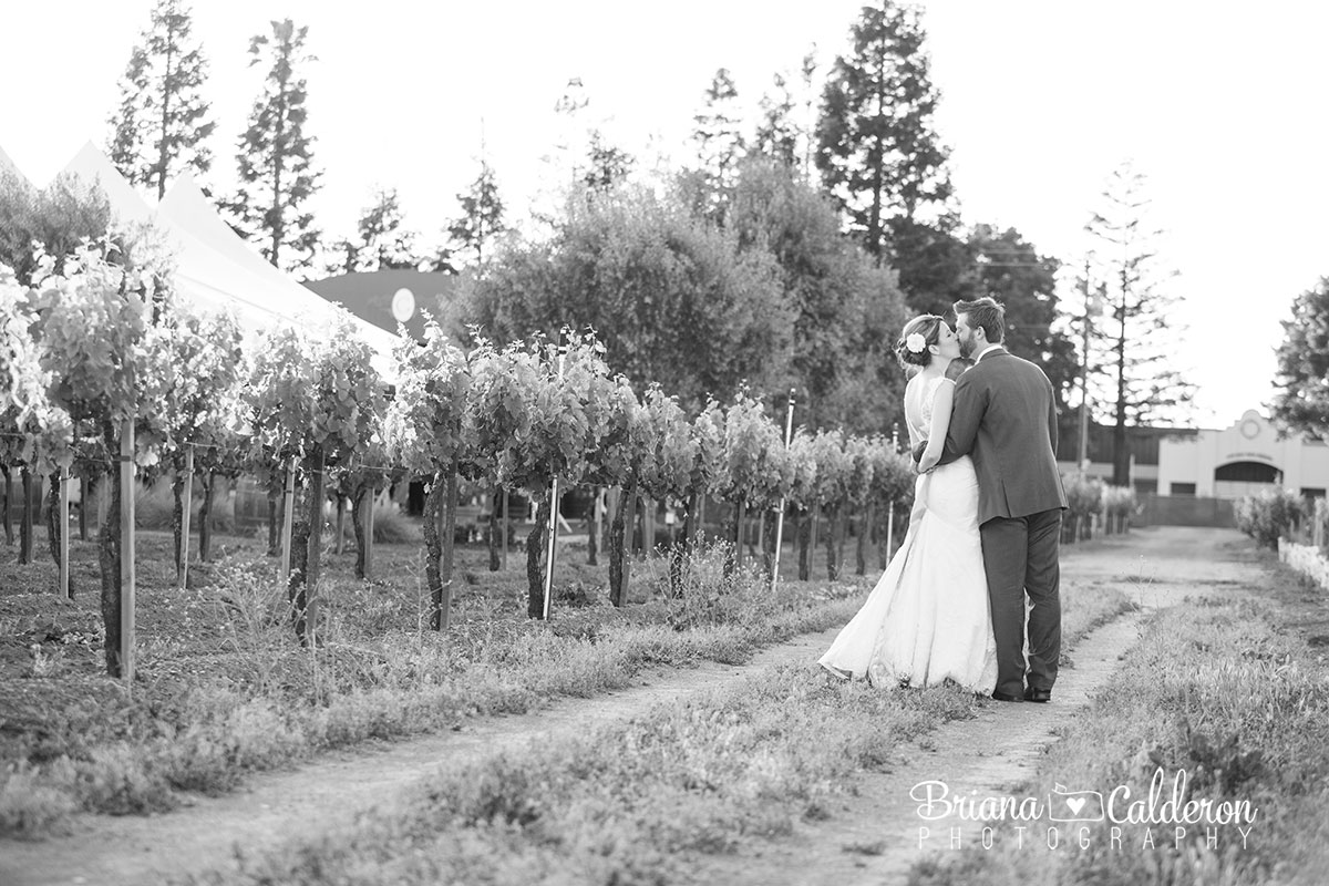 Wedding photos at Guglielmo Winery in Morgan Hill, CA. Photos by Briana Calderon Photography based in the San Francisco Bay Area.
