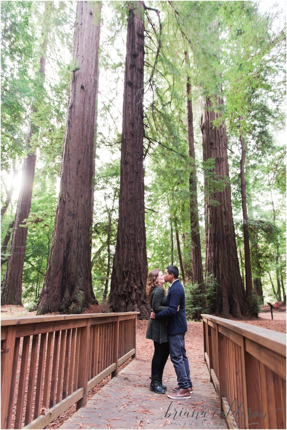 Engagement pictures at Henry Cowell Redwoods in Felton, CA by Briana Calderon Photography_1324.jpg