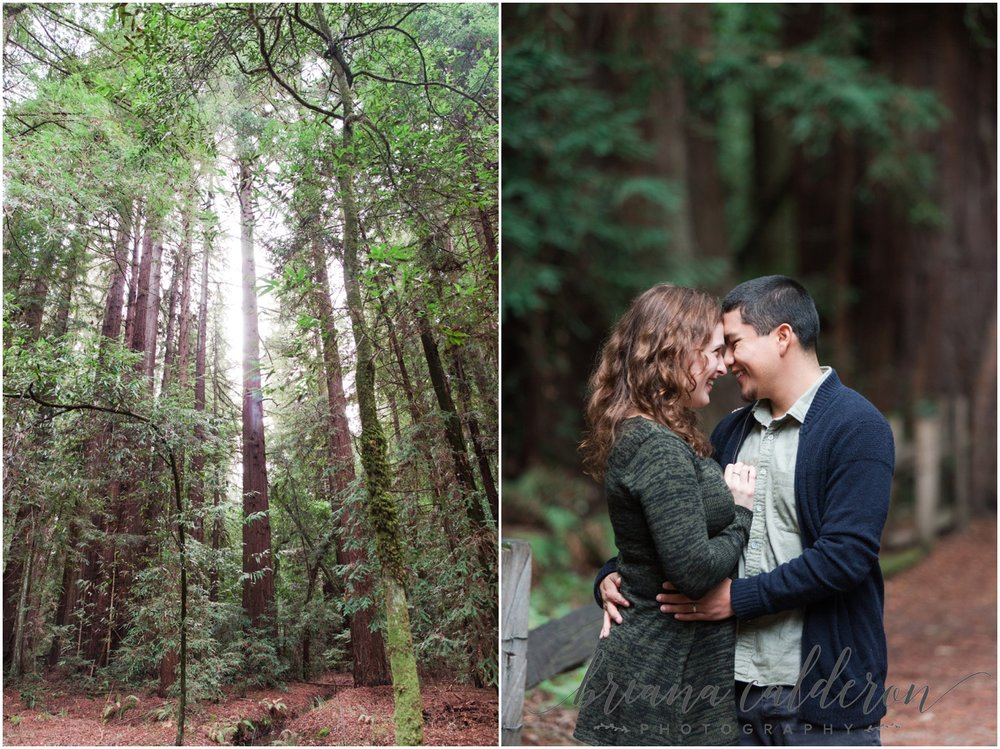 Engagement pictures at Henry Cowell Redwoods in Felton, CA by Briana Calderon Photography_1314.jpg