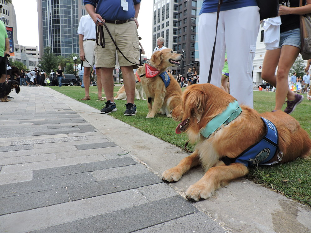Comfort Dogs for those who needed them.