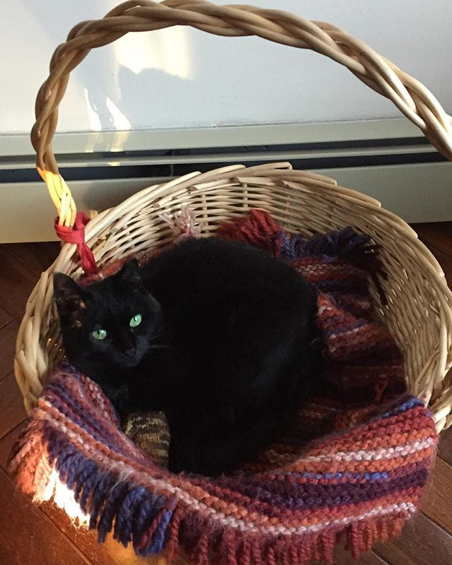 Our princess loves snuggling in her basket #catsofinstagram #cutecat #cats #basketcase #comfycat #snuggles #blackcat #parlorpanther