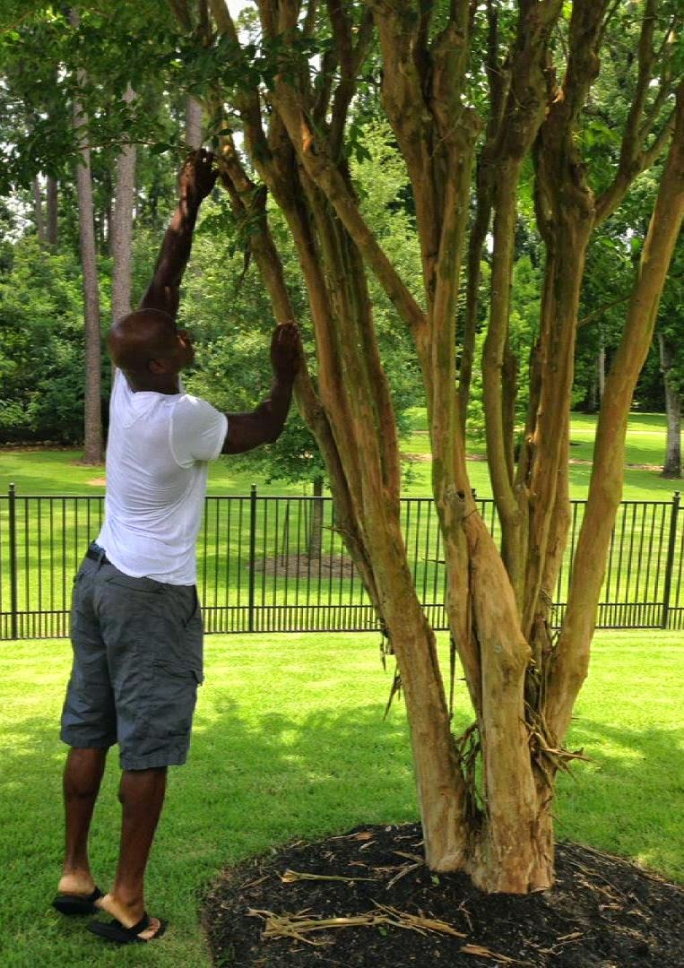 adrian-peterson-gets-switch-from-tree.jpg