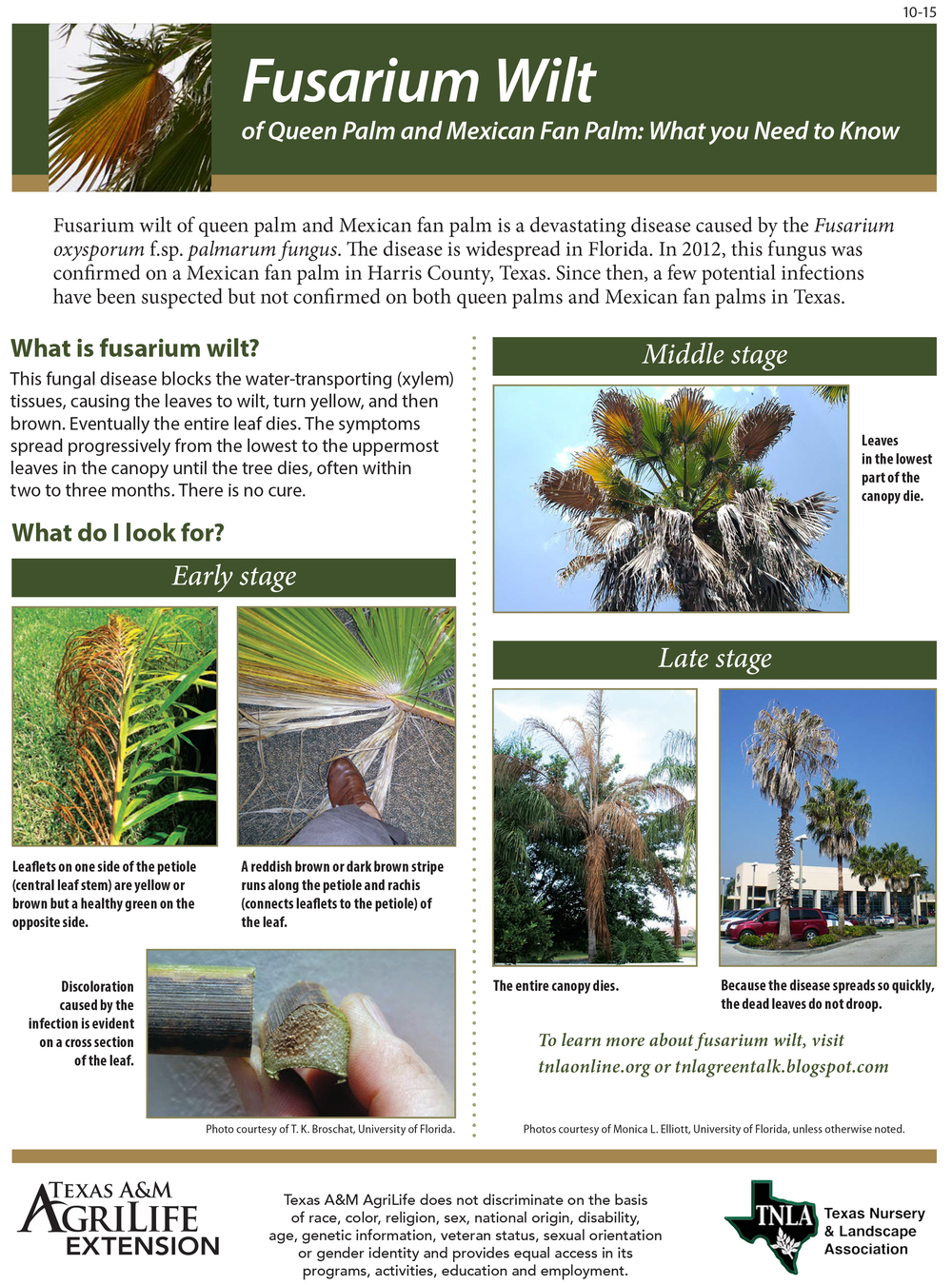 A Fusarium Wilt Fact Sheet by the Texas AgriLife Extension.