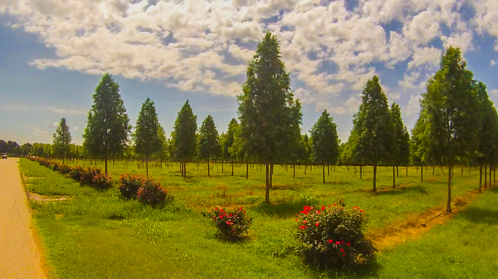 It was a beautiful day at the immaculately maintained Deep Fork Tree Farm in Acadia, Oklahoma, just off Route 66.