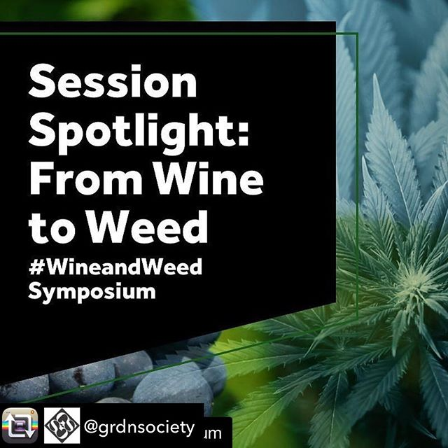 Repost from @grdnsociety using @RepostRegramApp - Looking forward to the #wineandweedsymposium in August! #Repost @wineweedsymposium ・・・ Session Spotlight: From Wine to Weed  Read Q&A's with speakers Rick Bakas, @weedhorn & Bakas Media, Erin Gore, @grdnsociety , Alicia Rose, @herbabuena and Tony Westfall, Good Company Wines.  Read Now: http://buff.ly/2tkL2Lk  #wineandweed #sonomacounty #wine #cannabis