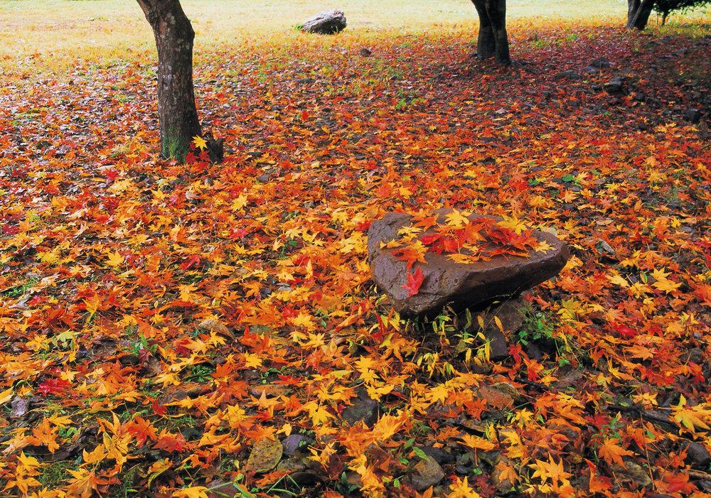 fall weather.jpg