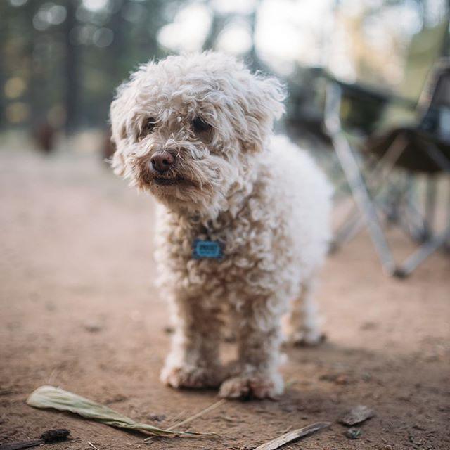 Man's best friend loves a good camping trip