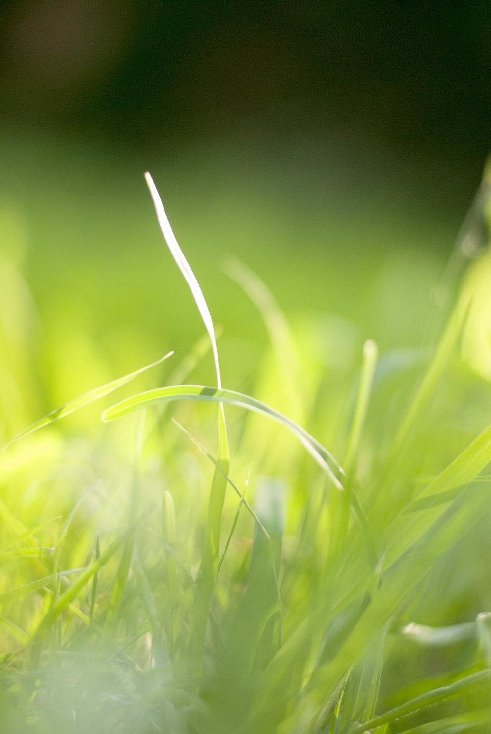 moregrass.jpg