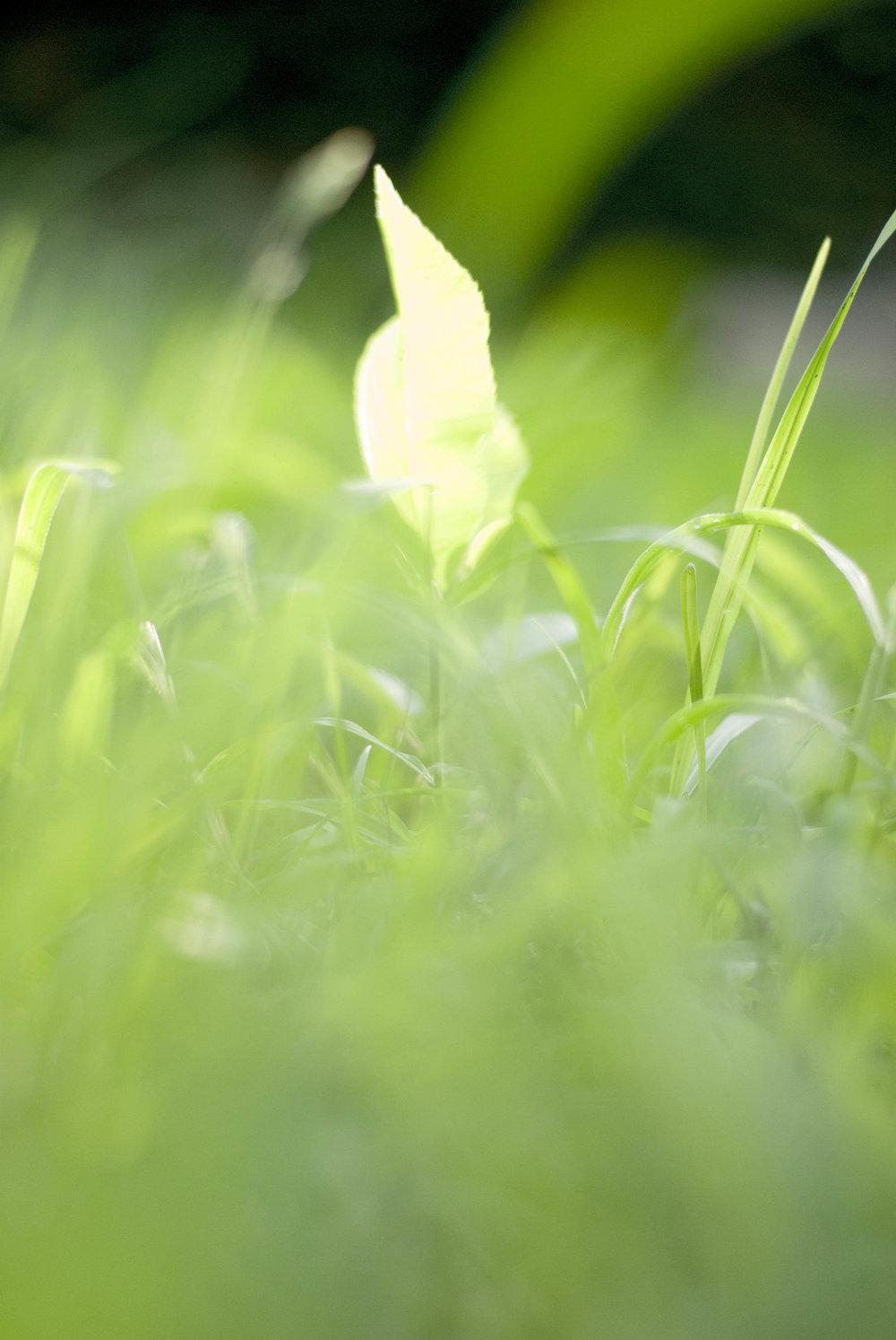 grassw2i.jpg
