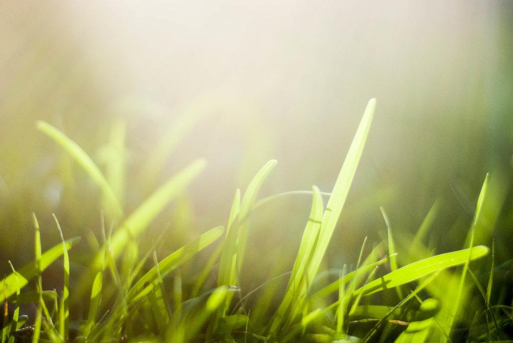 grass15.jpg