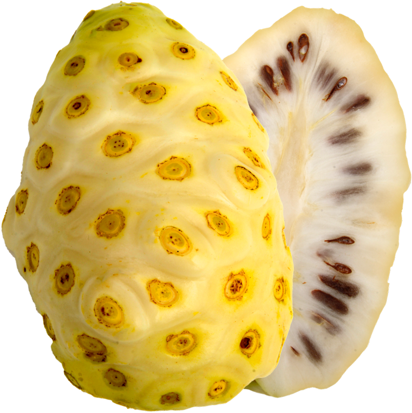 Ripe noni fruit (also known as  morinda citrifolia , Indian mulberry, or beach mulberry)
