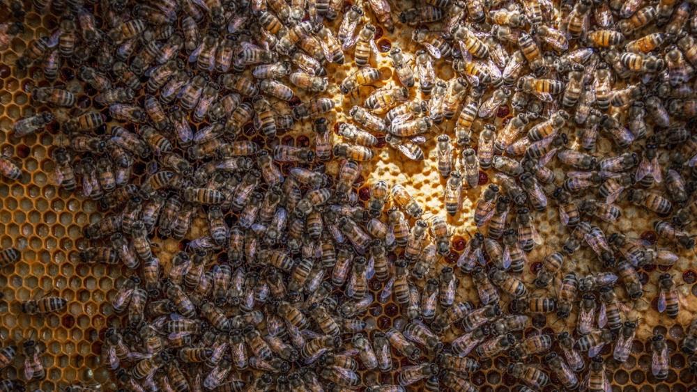 beehive-beekeeping-bees-971356.jpg