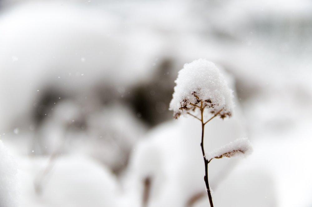 Refresh_WinterFlower_Seasons