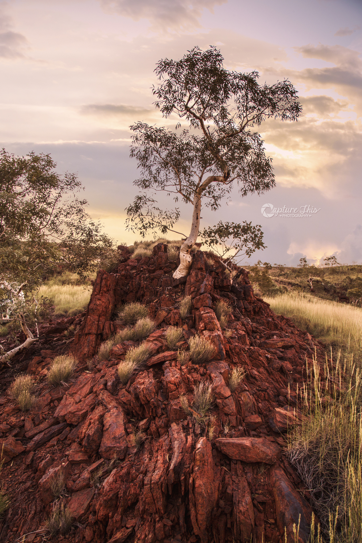 Pilbara Earth