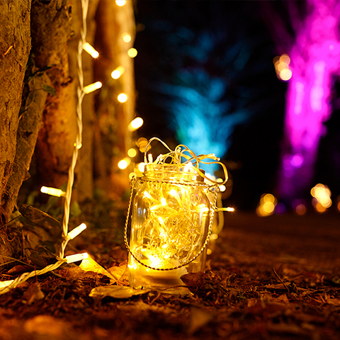 witley-lantern-festival.jpg