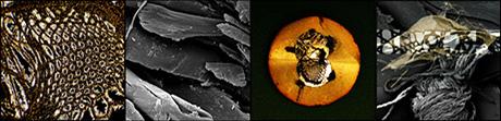 darkspace-disc