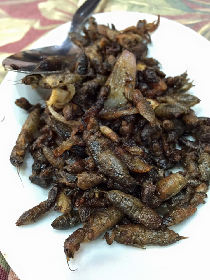 Kamaru.Don't be afraid! The crickets taste like tapa... to me!
