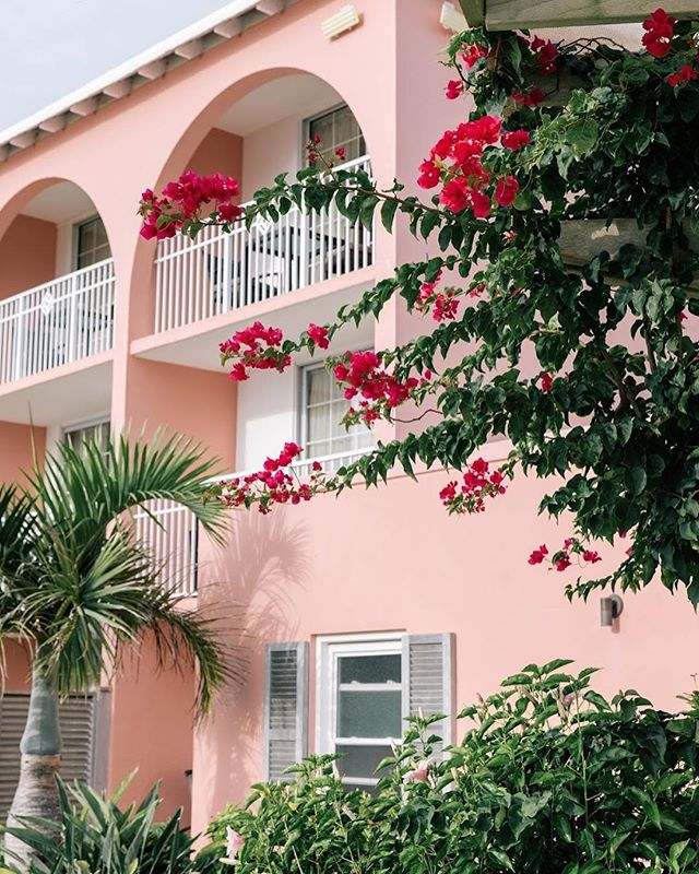 Admiring all the shades of pink wandering the grounds at the @princessbermuda • • • • • #sheisnotlost #wearetravelgirls #ladiesgoneglobal #darlingescapes #femmetravel #girlslovetravel #sidewalkerdaily #thetravelwomen #globelletravels #dametraveler #girlsborntotravel #travellushes #girlsmeetglobe #girlsvsglobe #sheexplores #radgirlslife #traveletting #timeoutsociety #myfavtourlina #lifewelltravelled #backpackerstory #takemethere #revistaviajar #bermuda #letsgoeverywhere #girlswhotravel #digitalnomad #travelgirl
