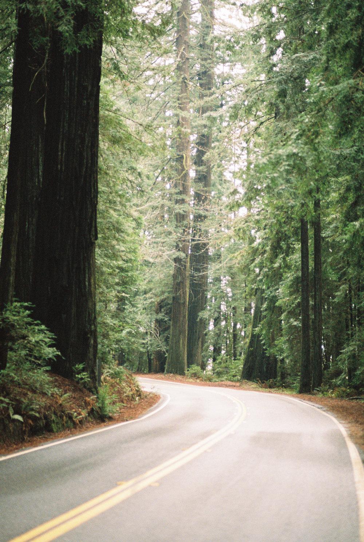 redwood wedding photographer