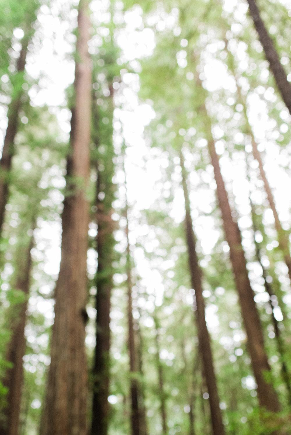 redwood film photographer
