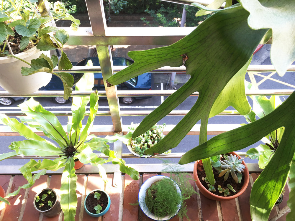 Little garden in the balcony -