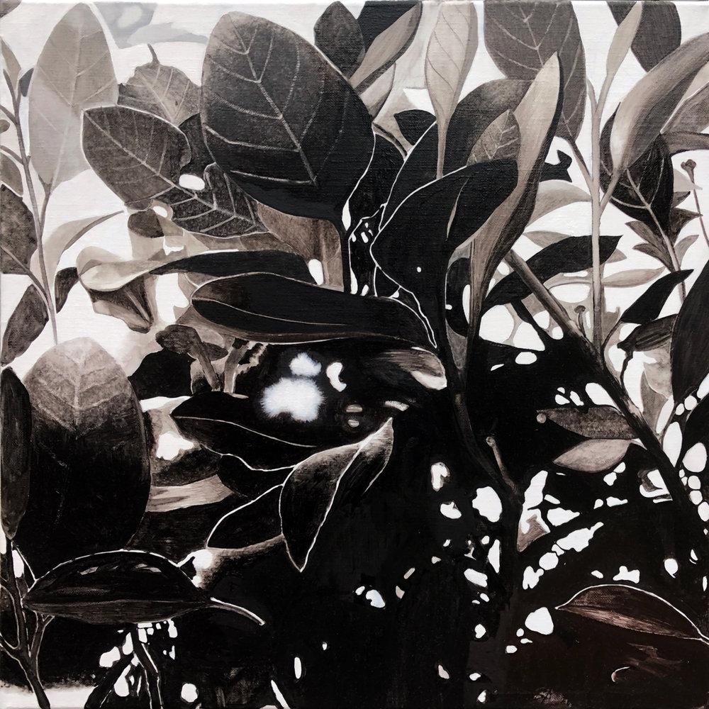 Foliage 1 2017 oil on linen 40 x 40 cm
